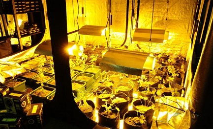 EXPOCANNABIS URUGUAY. L'inebriante profumo della marihuana nella prima esposizione dedicata alla pianta da poco legalizzata nel paese sudamericano