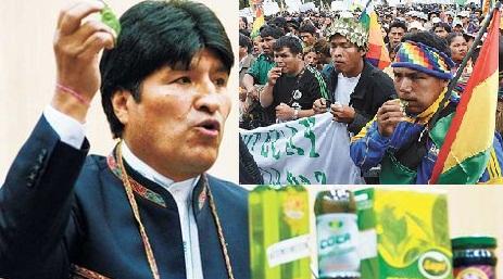 """MASTICANDO COCA. Dopo il """"bolo"""" la Bolivia mette in agenda la depenalizzazione della celebre foglia"""
