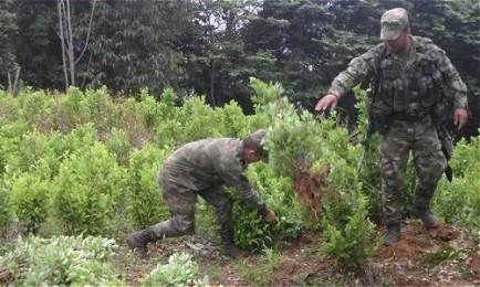 GUERRA PERSA. Aumenta la produzione di cocaina in Colombia. E il suo consumo sul mercato dell'America Latina