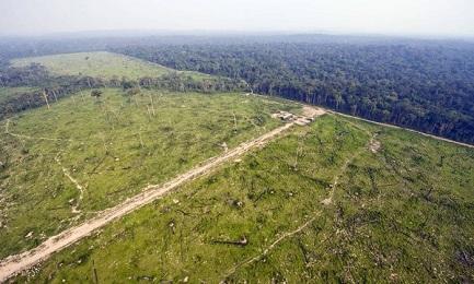 Vista aerea della foresta di Jamanxim, nello stato del Pará (Antônio Scorza/AFP)