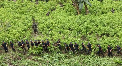 PIANTAGIONI FUORI CONTROLLO. In Colombia la superficie coltivata a coca è quadruplicata negli ultimi tre anni. Il governo lancia un nuovo piano di eradicazione