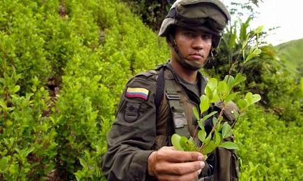 COLOMBIA. MENO ARMI, PIÚ COCA. Si estendono le piantagioni di cocaina nonostante il disarmo della guerriglia. Adesso superano il caffè come prodotto di esportazione