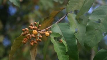 """L'AMAZZONIA PUÓ SALVARE VITE. Ricercatori osservano che una pianta uccide cellule cancerogene nel fegato. Lo studio pubblicato sulla rivista scientifica """"Heliyon"""""""